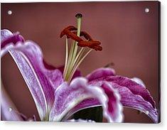 Blushing Bloom Acrylic Print