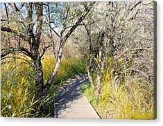 Boardwalk To The Birds Acrylic Print by John  Greaves