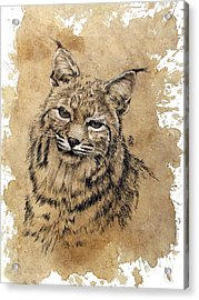 Bobcat Acrylic Print by Debra Jones