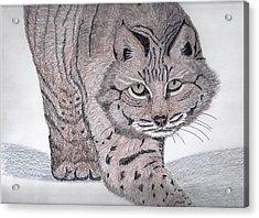 Bobcat Acrylic Print by Tony  Nelson