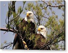 Bog River Eagles Close Up  Acrylic Print