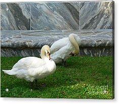 Bok Tower Swans Acrylic Print