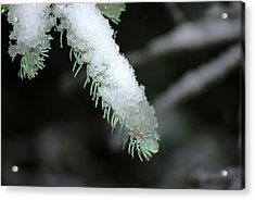 Bokeh Of Evergreen In Snow Acrylic Print