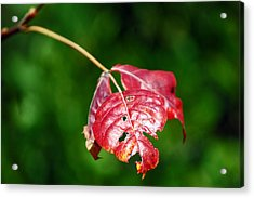 Bokeh Of Leaf Acrylic Print