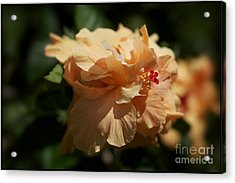 Bold And The Beautiful Acrylic Print by Jacques ISMAEL