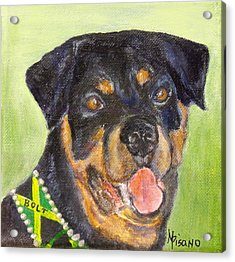 Bolt The Rottreiler Acrylic Print