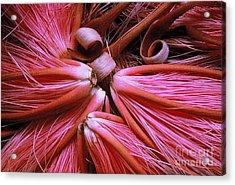 Bombax Flowers Acrylic Print by Ranjini Kandasamy