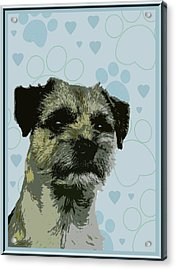 Border Terrier Acrylic Print by One Rude Dawg Orcutt