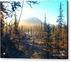 Boreal Forest Sunrise Acrylic Print by Adam Owen