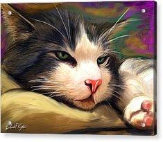 Bored Cat Acrylic Print by David Kyte