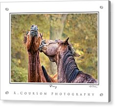 Bossy Acrylic Print by Ryan Courson