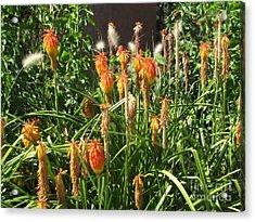 Botanic Dreams Acrylic Print