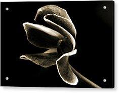 Botanical Abstract. Acrylic Print by Terence Davis