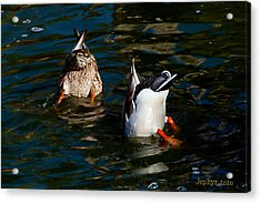 Bottoms Up Acrylic Print by Jephyr Art