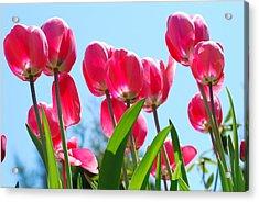 Bouquet Of Tulips Acrylic Print
