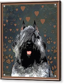 Bouvier Des Flandres Acrylic Print by One Rude Dawg Orcutt