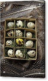 Box Of Quail Eggs Acrylic Print by Garry Gay