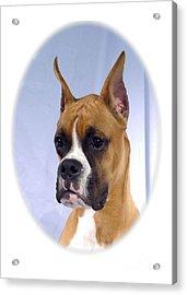 Boxer 07 Acrylic Print by Larry Matthews