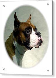 Boxer 1018 Acrylic Print by Larry Matthews