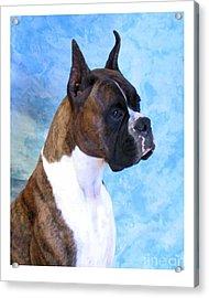 Boxer 13 Acrylic Print by Larry Matthews