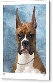 Boxer 155 Acrylic Print by Larry Matthews