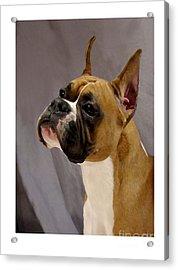 Boxer 413 Acrylic Print by Larry Matthews