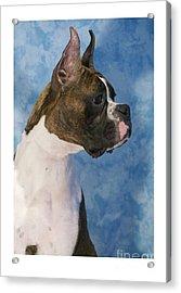 Boxer 469 Acrylic Print by Larry Matthews