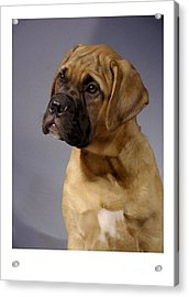 Boxer 51 Acrylic Print by Larry Matthews
