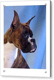 Boxer 59 Acrylic Print by Larry Matthews