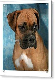 Boxer 624 Acrylic Print by Larry Matthews