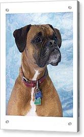 Boxer 950 Acrylic Print by Larry Matthews