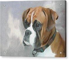 Boxer Acrylic Print by JG Keevil