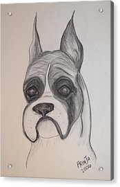 Acrylic Print featuring the drawing Boxer by Maria Urso