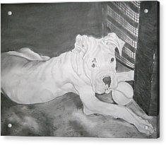 Boxer Pup Acrylic Print by Danielle Shepard