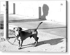 Boy Meets Dog Acrylic Print by Joe Jake Pratt