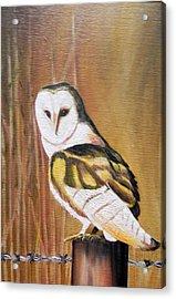 Bran Owl Acrylic Print by Usha Rai