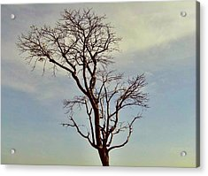 Branch Out Acrylic Print by Peter P G