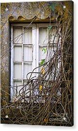 Branchy Window Acrylic Print