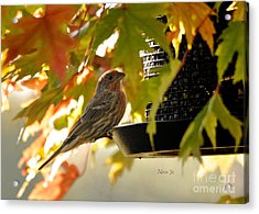 Breakfast With A View Acrylic Print by Nava Thompson