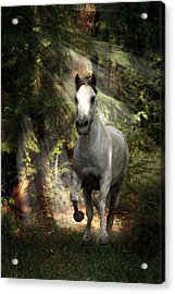 Breaking Dawn Gallop Acrylic Print by Wes and Dotty Weber