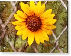 Acrylic Print featuring the photograph Breaking Out by Joan Bertucci