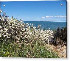 Acrylic Print featuring the photograph Brewster Beach by Robin Regan