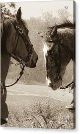 Brief Encounter Acrylic Print by Kim Henderson