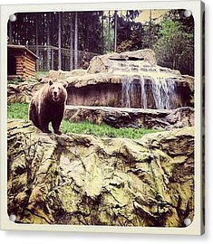 Bärig... #bär #bear #waterfall #epic Acrylic Print