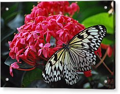 Bright And Beautiful Acrylic Print by Amee Cave