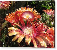 Bright And Beautiful Acrylic Print