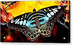 Acrylic Print featuring the photograph Bright And Blue by Rima Biswas