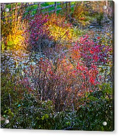Bright Autumn Light Acrylic Print