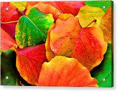 Bright Beautiful Fall Leaves Acrylic Print