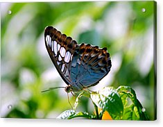 Acrylic Print featuring the photograph Bright Blue Butterfly by Peggy Franz